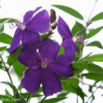 Purple Beauty+Wordless Wednesday Linky