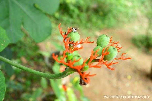 Flowers-Sri Lanka