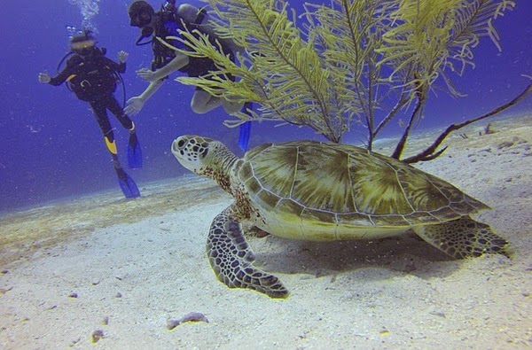 Scuba diving at Caribbean Islands