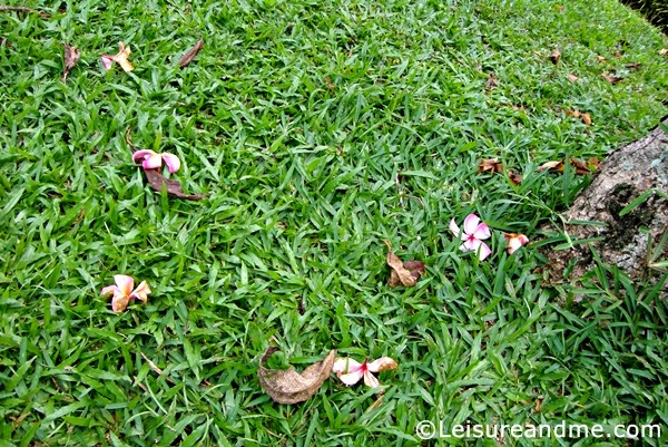 Flowers captured at the Ang Mo Kio Town Garden West