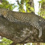 Best Tips to Plan Your Next South Africa Holiday