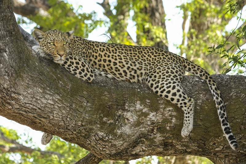 Things you should know before going on African Wildlife Safari