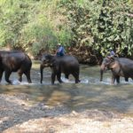 Why You Should Ride Elephants in Phuket