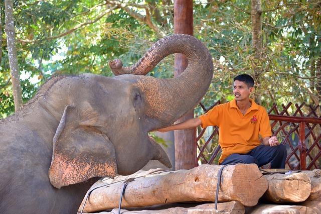 Phuket Elephant Trekking