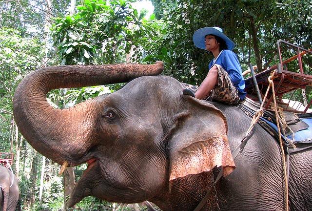 phuket elephant trekking.