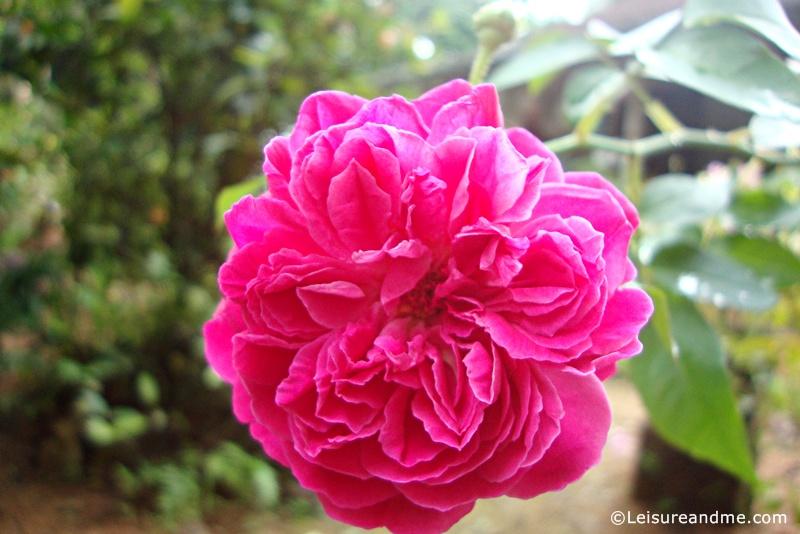 Flowers from Sri Lanka