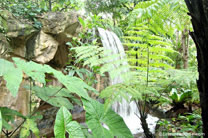 Botanic-Garden-Singapore-2