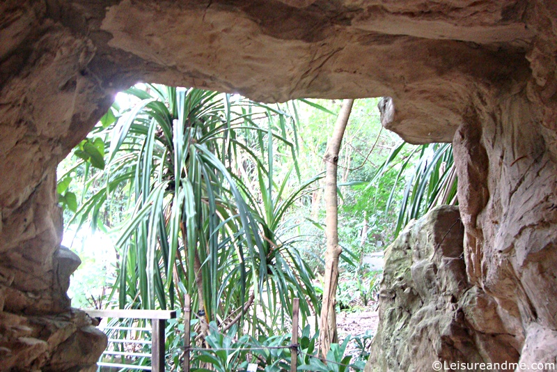 Botanic-Garden-Singapore-4