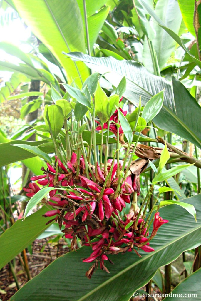 Botanic-Garden-Singapore