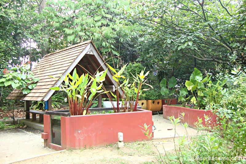 Botanic-Gardens-Singapore-2