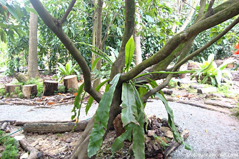 Botanic-Gardens-Singapore-3