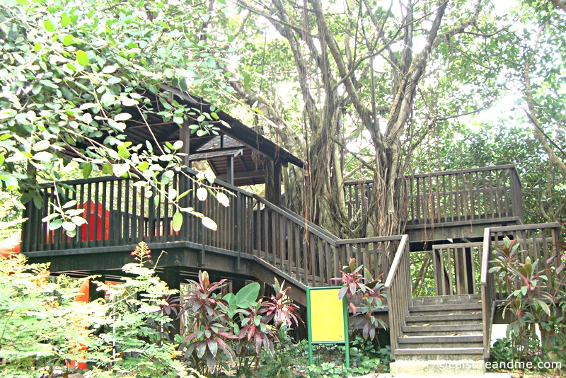 Botanic-Gardens-Singapore-tree-house