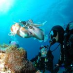 Enjoy Scuba Diving in Oahu, Hawaii in your Next Holiday