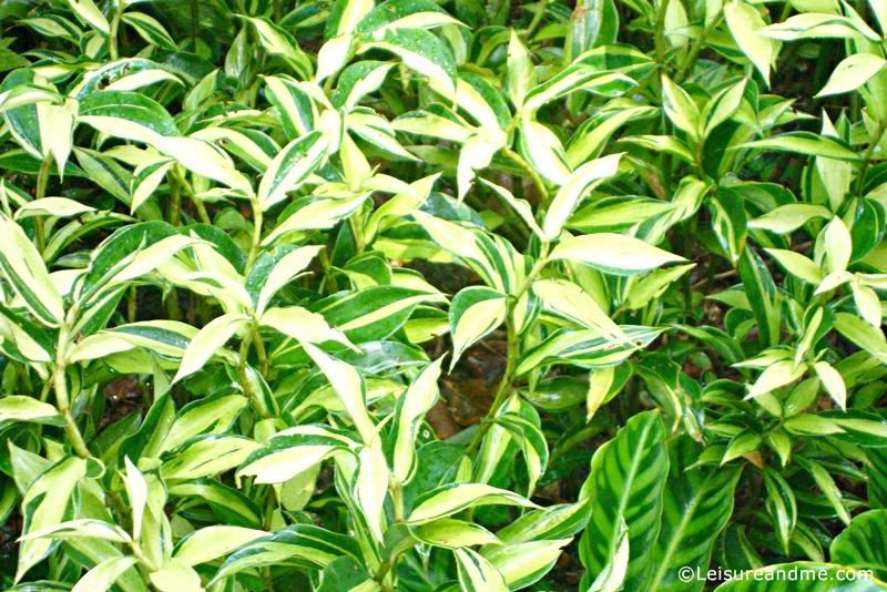 Foliage-Garden-Singapore-Botanic-Gardens-11