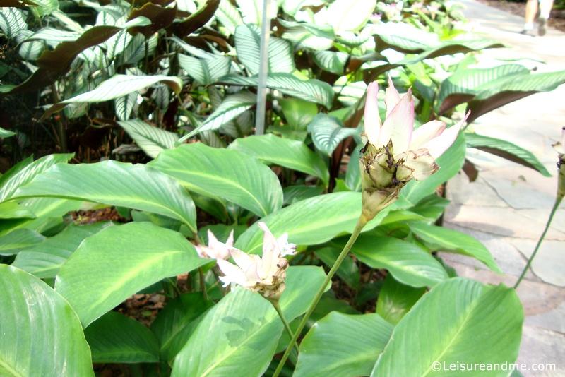 Foliage-Garden-Singapore-Botanic-Gardens-12