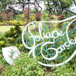 Singapore Botanic Gardens-Foliage Garden