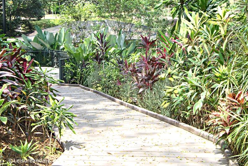 Foliage-Garden-Singapore-Botanic-Gardens-3