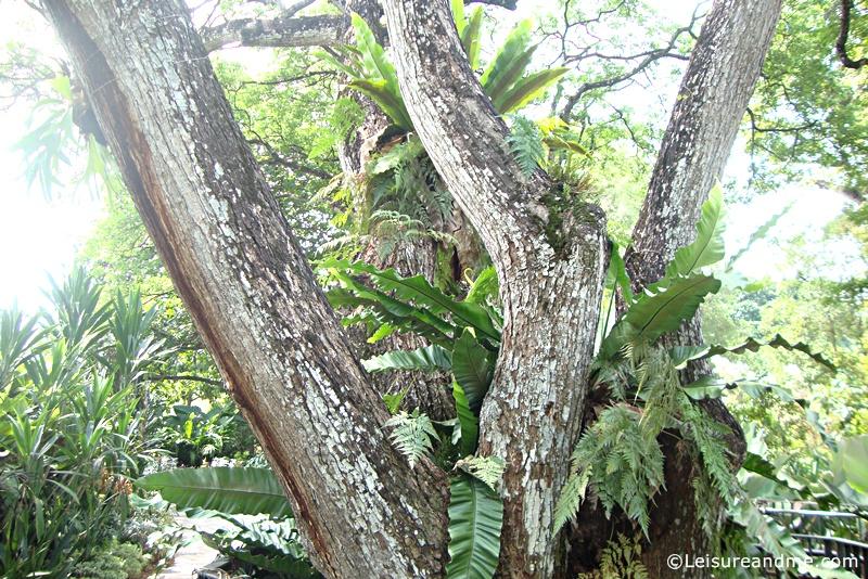 Foliage-Garden-Singapore-Botanic-Gardens-4
