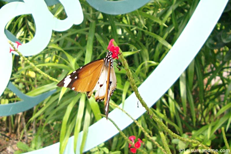Foliage-Garden-Singapore-Botanic-Gardens-8