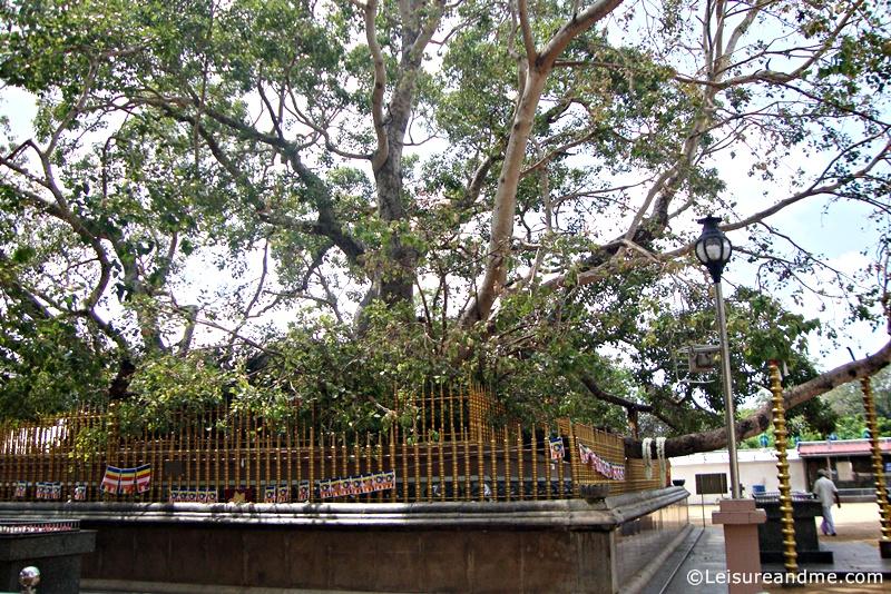 Kataragama Kiri Vehera-Bo-Tree