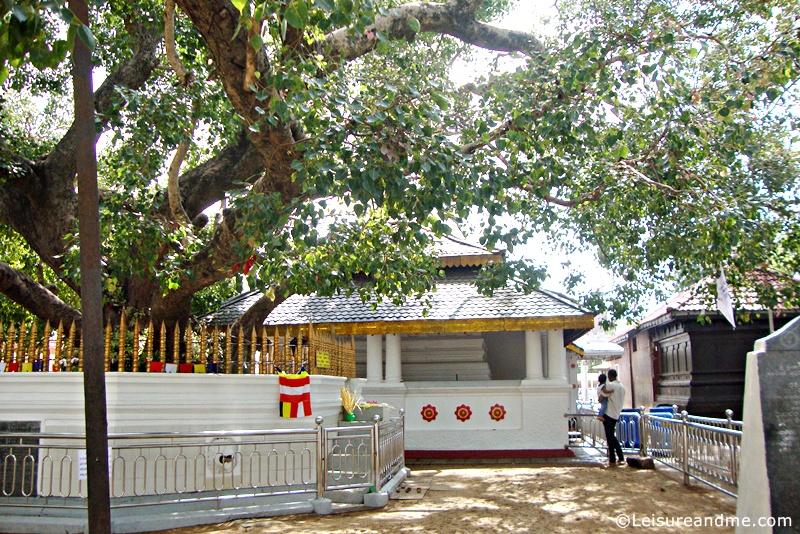 Kataragama Kiri Vehera Bo Tree