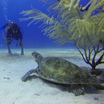 7 Cool facts about the PADI Dive Instructor Course in Thailand