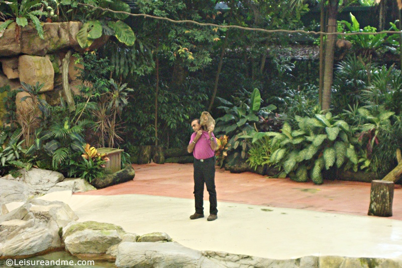 Animal-show-at-the-Singapore-Zoo