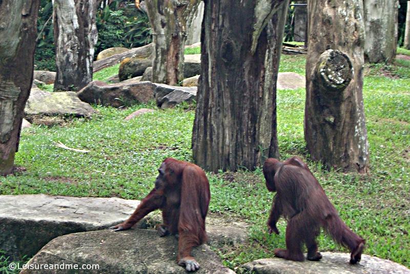 Singapore-Zoo-17