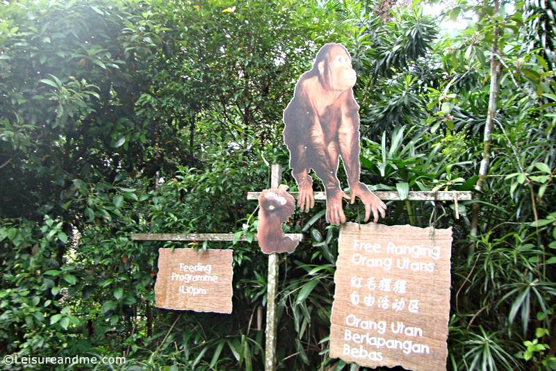 Singapore-Zoo-18