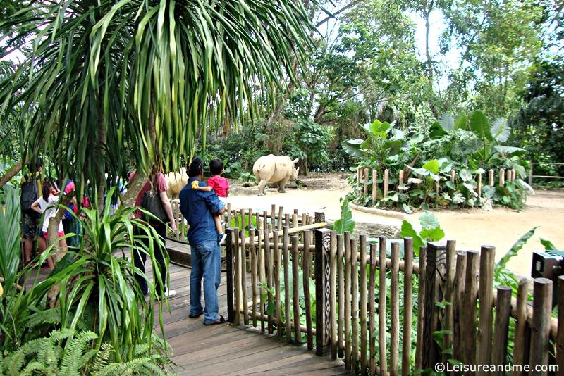 Singapore-Zoo-20