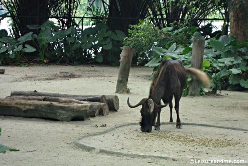 Singapore-Zoo-32
