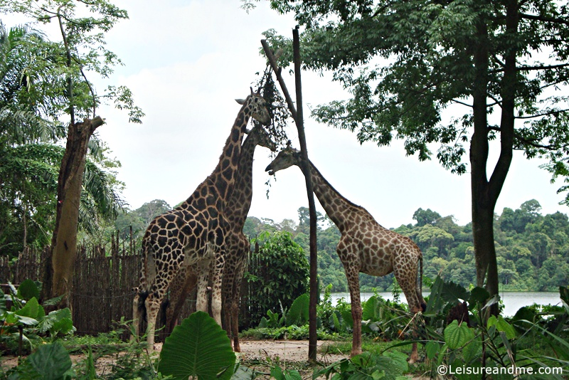 Singapore-Zoo-34