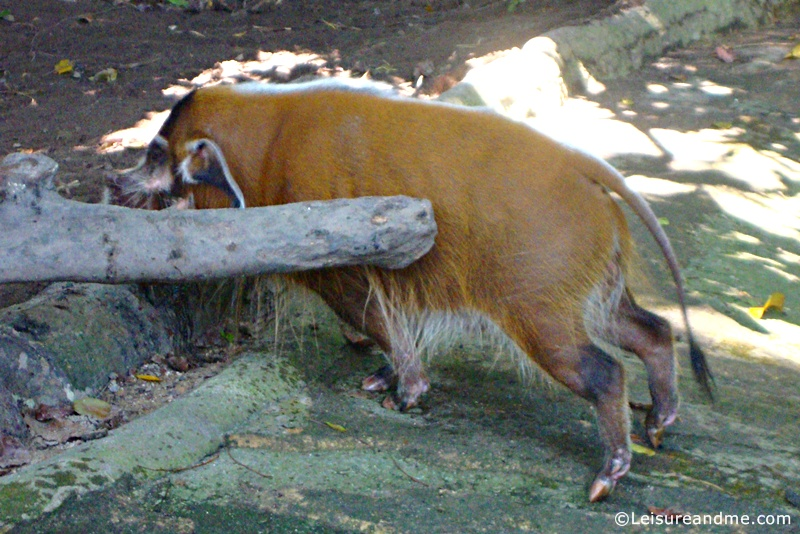 A-day-at-the-Singapore-Zoo