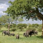 Three of the Best Things to do when on Holiday in Tanzania