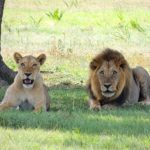Tips for a Successful Tanzania Safari