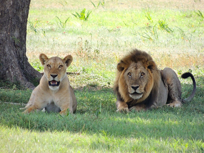 Reasons to visit the Kruger National Park