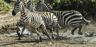 Turn Your African Safari Into An Unforgettable Experience