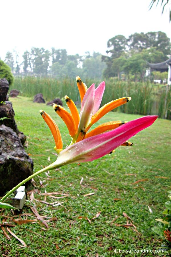 Chinese-Garden-Singapore-21