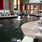 Koi Pond at Bright Hill Temple – Singapore