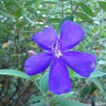 Photo Friday:Pretty in Purple