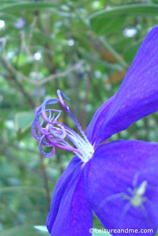 Sri-lanka-flowers-3