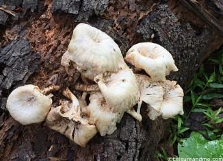 Mushroom-photography