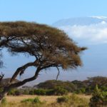 3 Must Know Tips for a Successful Climb of Mt. Kilimanjaro