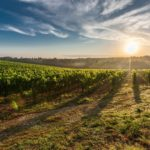 Top 3 European Wine Destinations