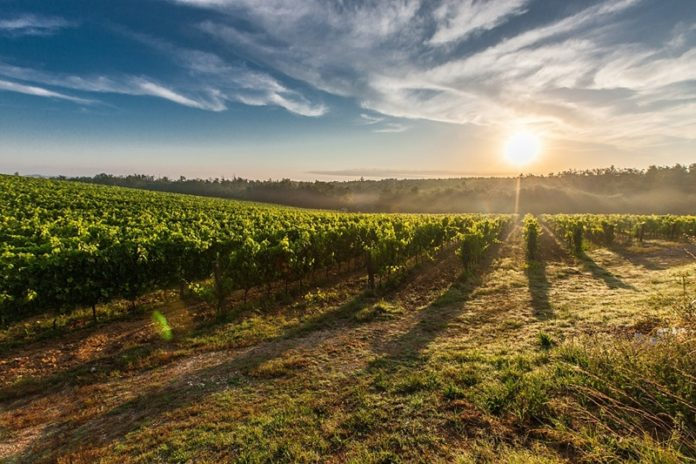 Top 3 European Wine Destinations