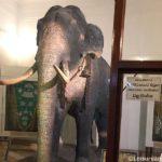 Raja Museum – Kandy , Sri Lanka