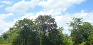 Dambana-Sri Lanka