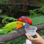 A Day at the Jurong Bird Park –Singapore