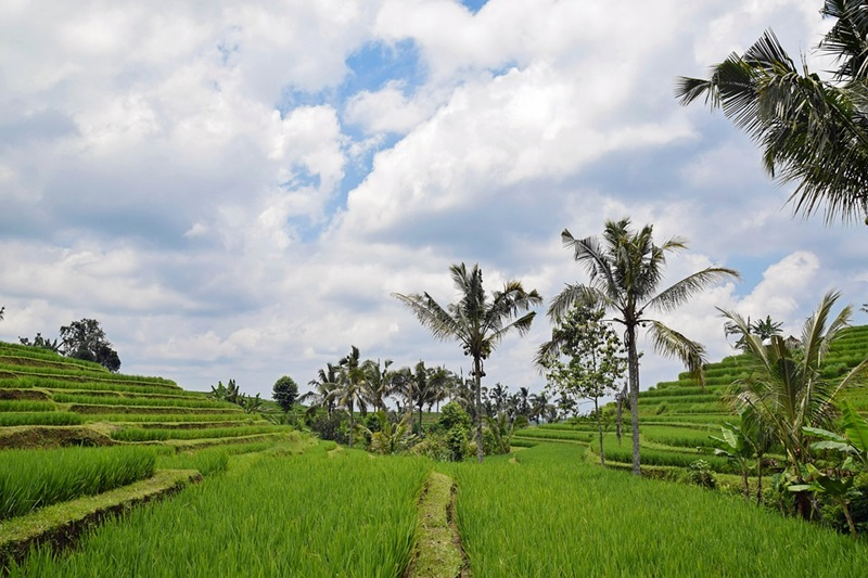 Why Bali is a great Travel and Leisure Destination