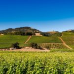 Napa Valley : A Land of Beauty and Culture the Whole Family Can Learn From